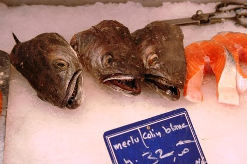 何の魚だろう