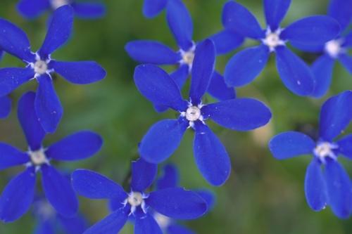 さてこの花は?